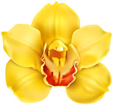 yellow orchid yellow orchid transparent png clip gallery yopriceville