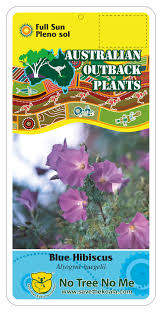 arizona native plants list australian native plant nursery u2014 australian outback plants