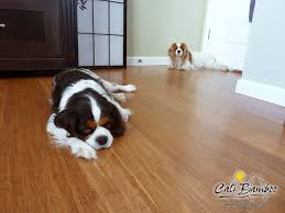 46 best pet flooring images on bamboo cali