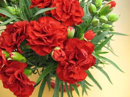 sunday flower delivery suzuya rakuten ichiba rakuten global market s day