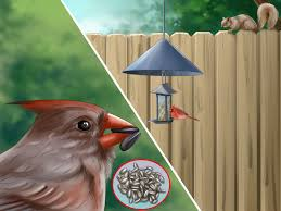 south florida bird house plans