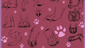 realistic wolf drawing tutorial how to draw a realistic wolf side