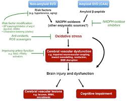 frontiers cerebral small vessel disease targeting oxidative