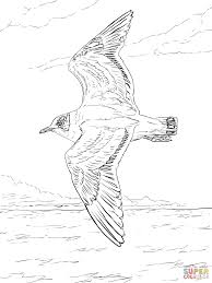 franklin u0027s gull coloring page free printable coloring pages