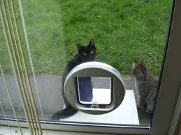 Cat Door For Interior Door Cat Flap For Glass Door Gallery Glass Door Interior Doors