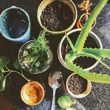 free plants craftykin