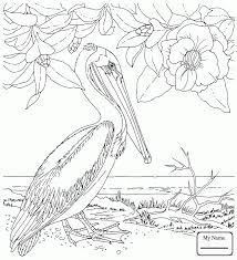 coloring pages meadowlark and bitterroot montana state bird and