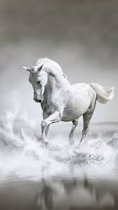 camargue white horse wallpapers the 25 best white horses ideas on pinterest horses pretty