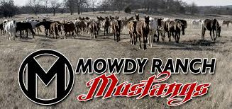 mustang ranch history about mowdy ranch mustangs