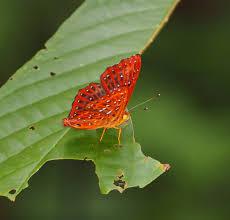 a butterfly bonanza nick s