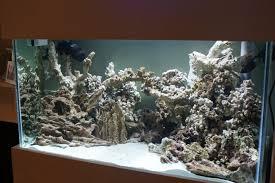 reef aquascape design u2013 aquarium images