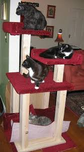 Make Your Own Cat Tree Plans Free by Build Your Own Cat Tree Plans Homemade Cat Tree Cattrees Make