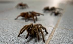 Afraid Of Spiders Meme - 10 things you ll only know if you re afraid of spiders metro news
