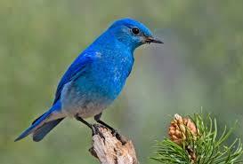 Montana birds images Best birds in montana outside my window jpg