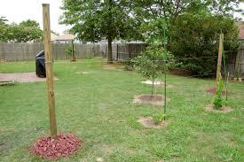 triyae com u003d backyard vineyard design various design inspiration
