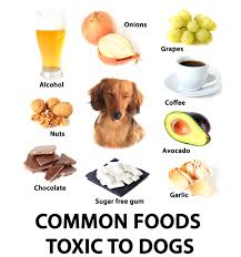 are onions for dogs are grapes bad for dogs find out here
