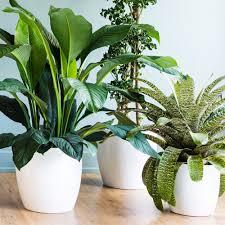 indoor plants sunset
