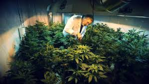controlling of temperature and humidity in your grow room