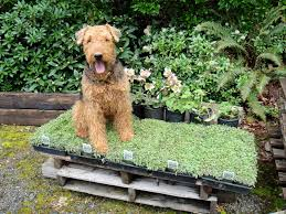 backyard landscaping with dogs outdoor furniture design and ideas