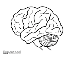 Human Brain Clipart Coloring Worksheets Brain Coloring Page