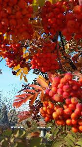 116 best denver botanical gardens images on pinterest fused