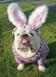 easter bunny costume easter bunny costume award vote for the best easter bunny