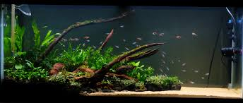types of aquarium low tech planted tank lighting iron blog