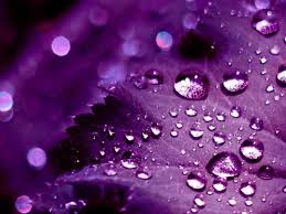 purple wallpaper free download photo picture idolza