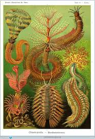 By Hanging 1898 Shower Curtain For Sale By Science Source 172 Best Ernst Haeckel Images On Pinterest Botanical