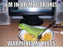 Parrot Meme - classic meme parrot partyparrot