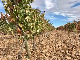 Trellis Wine Spanish Wine 101 Understanding Regions Grapes Classifications