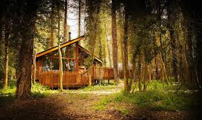 forest holidays relax in and peaceful woodlands across the