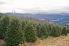 boone nc christmas tree farms christmas lights decoration