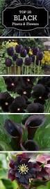 best 25 gothic flowers ideas on pinterest black flowers black