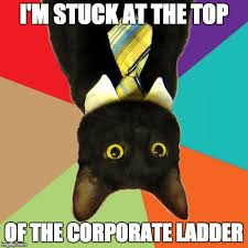 Business Cat Memes - business cat meme imgflip