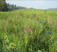 native wetland plants mix 129 southern wetland meadow mix roundstone native seed company