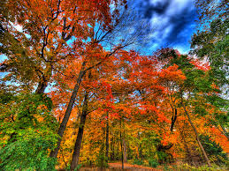 Fall Autumn by Splendid Fall Photography Tips And Tricks To Make The Most Of This