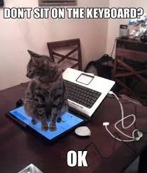 Cat Sitting Meme - cat sitting on laptop screen justpost virtually entertaining