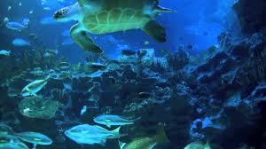 aquarium 2hr relax music youtube