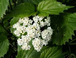 June Flowers - mid june flowers new hampshire garden solutions