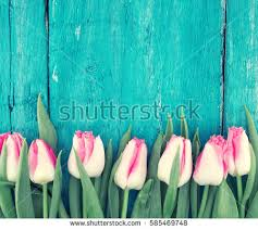 turquoise flowers turquoise stock images royalty free images vectors