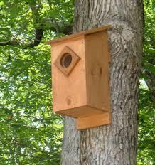 screech owl house plans how to build a screech owl box feltmagnet