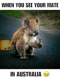 Aussie Memes - australian salute only in australia