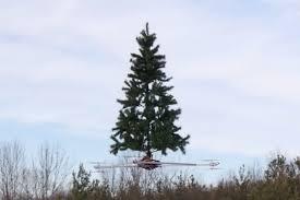tree 3 1500x1000 jpg ver u003d2