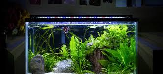 aquarium design exle planted tank heavily planted betta tank by dan adams aquarium