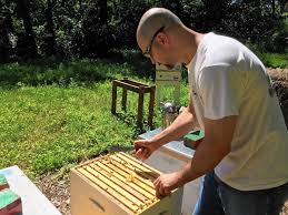 naperville considering backyard beekeeping rules naperville sun