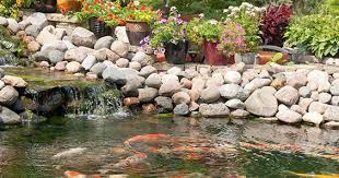 Backyard Ponds For Dummies Diy Pond Construction A Step By Step Guide To Building Your Own Pond