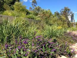 small native plants for australian gardens native gardens of the brand new barangaroo reserve u2013 janna