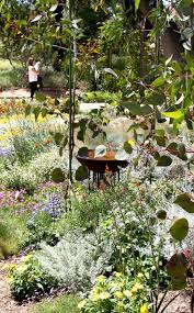 garden rockery ideas best 25 australian native garden ideas on pinterest australian