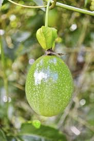 flower fruit picking fruit learn how and when to harvest fruit